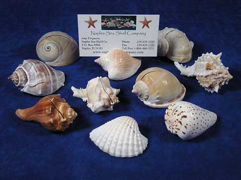 Place card holders made from seashells.