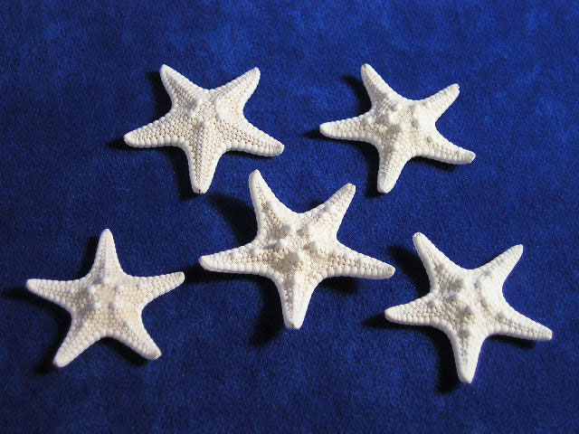 Small Bumpy White Starfish