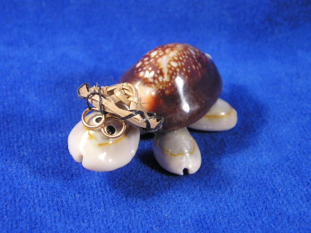 Sea shell turtle with glasses for What are shells made of